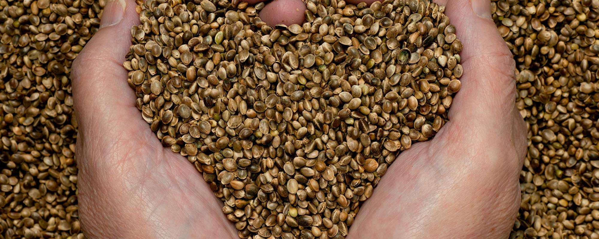 hands scooping up seeds